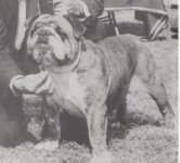 Kip, Laura Jepsen's pet bulldog, 1958