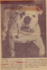 Judy, Laura's pet bulldog